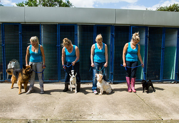 Dog Kennels Rotherham