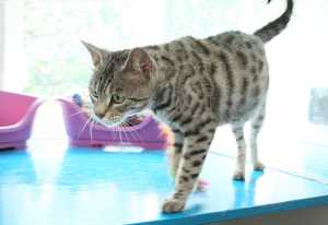 Cattery Rotherham