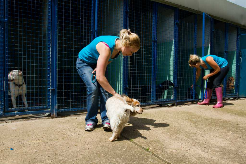 Dog Kennels Maltby