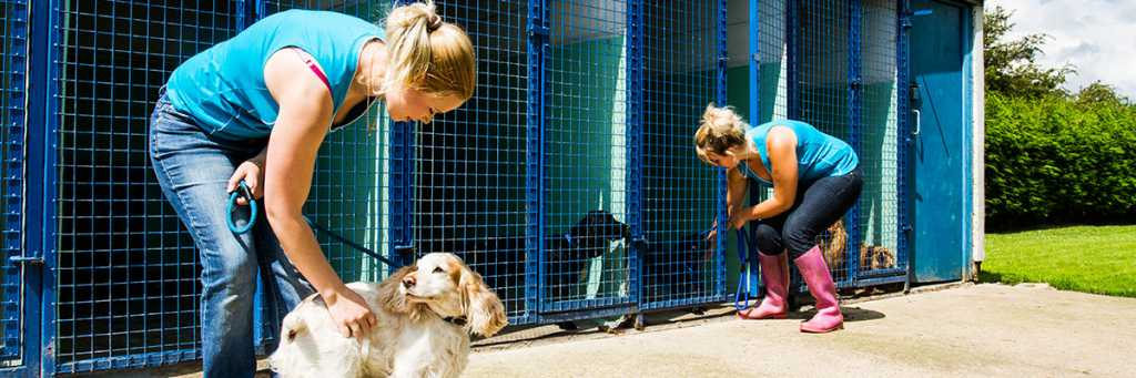Dog Boarding Kennels Rotherham