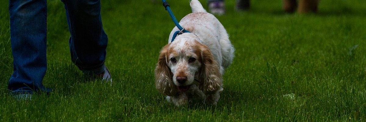 Jaycliffe Pets Image