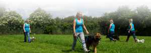 Jaycliffe staff and dogs