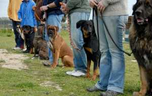 Dog Daycare Rotherham