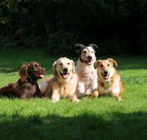 Dogs in the sun