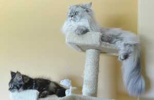 Cats on a scratching post
