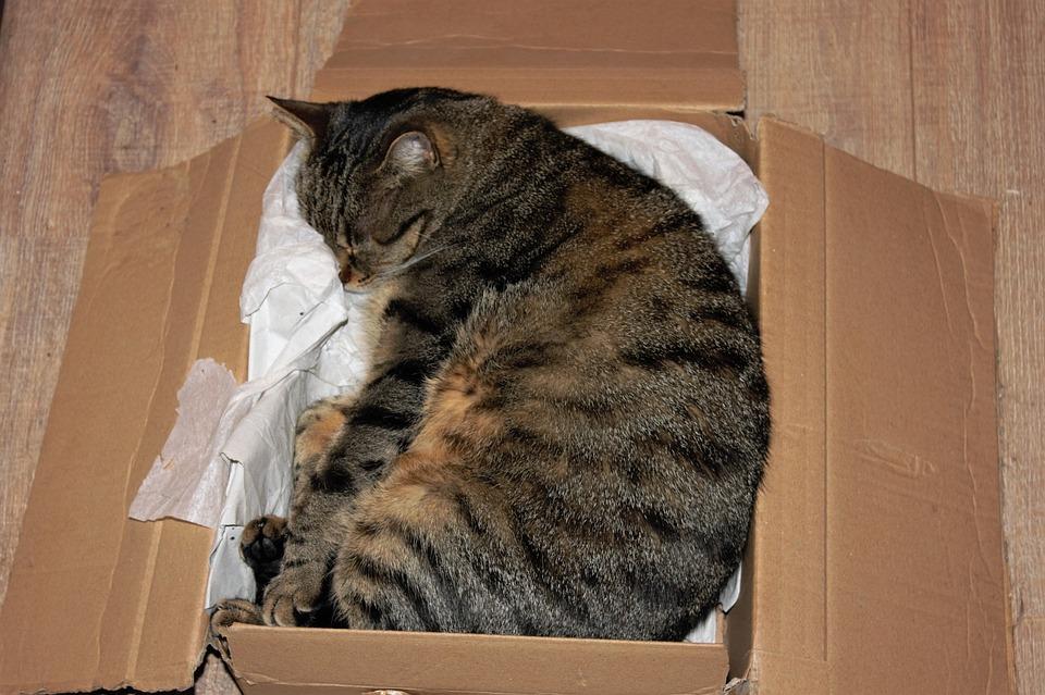 cat-1332688_960_720