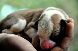 puppy in a hand