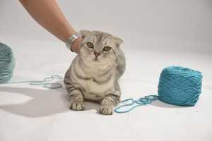 Cat Grooming in Maltby