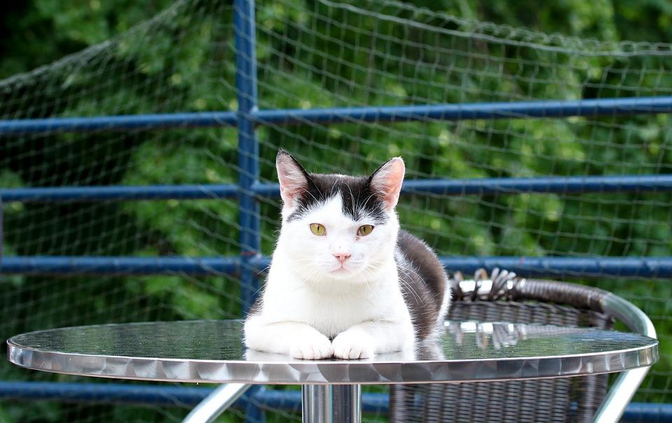 cat-3509266_960_720