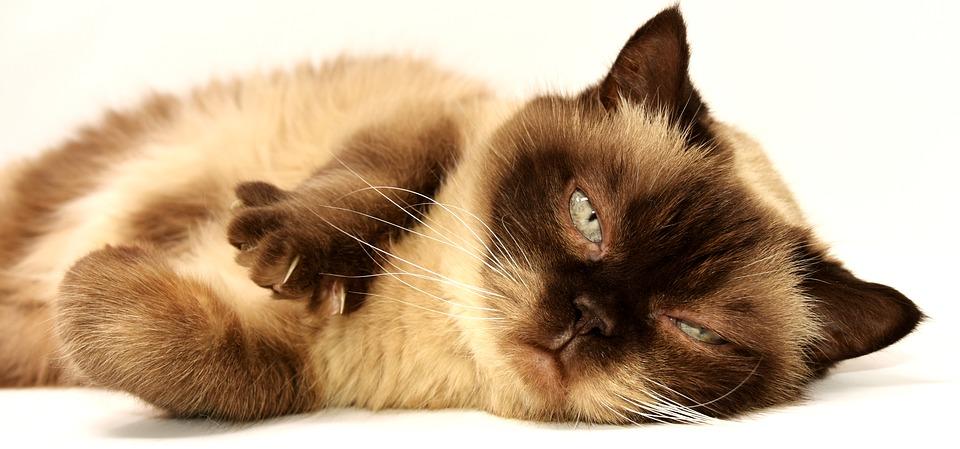 cat-3113513_960_720