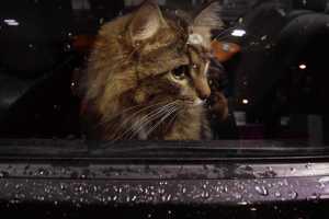 Cat at a window