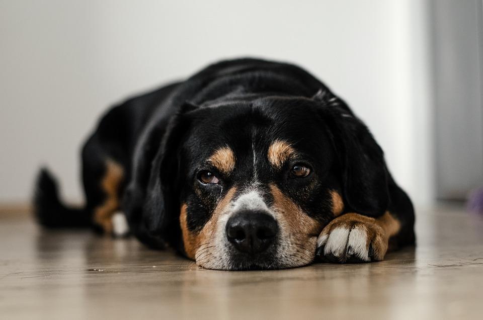 dog-691641_960_720