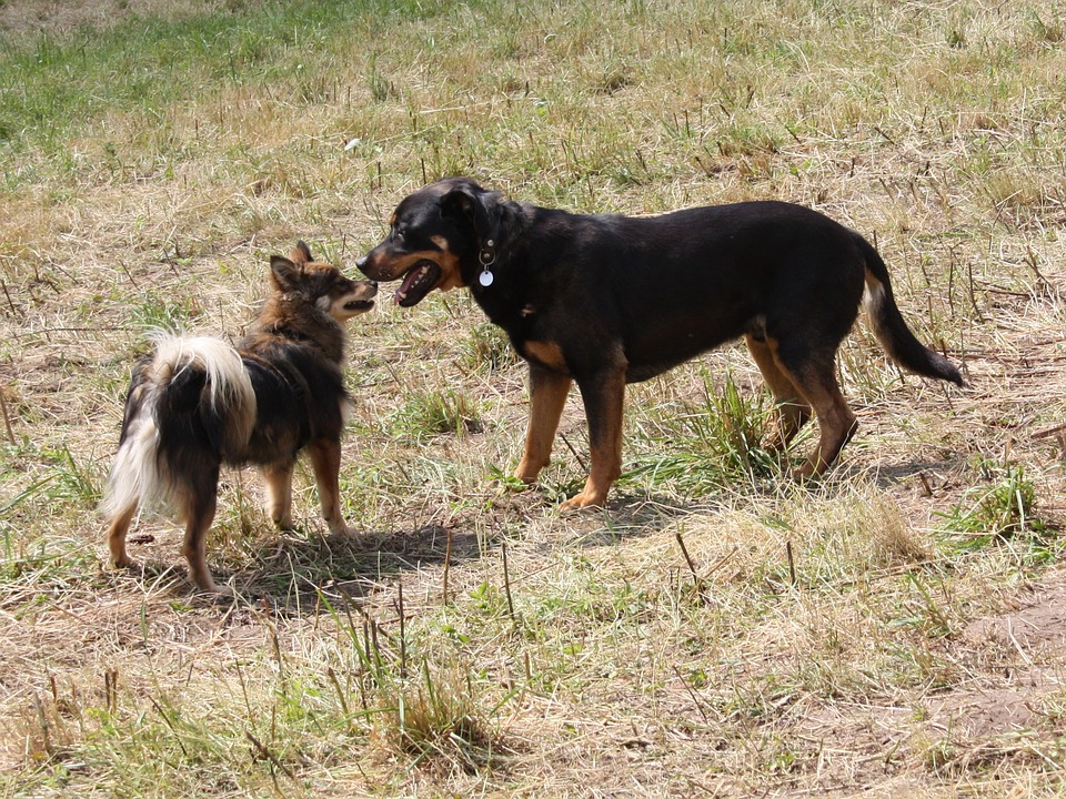 dogs-1236058_960_720