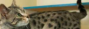 cat in a cattery