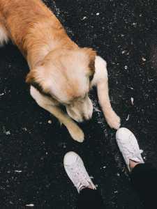 dog with someone running