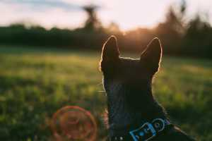 What garden plants are toxic to dogs?