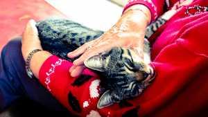 lady stroking cat
