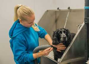 Dog Grooming Rotherham