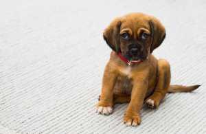 Puppy Boarding Rotherham
