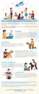 Why is dog grooming important Rotherham (infographic)