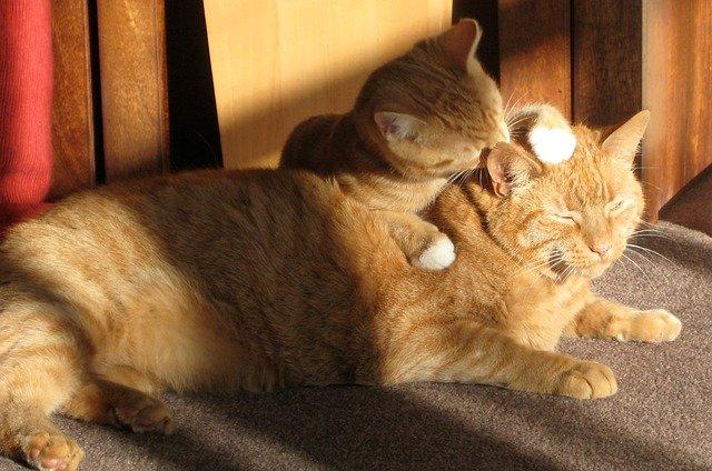 Do cats need grooming?